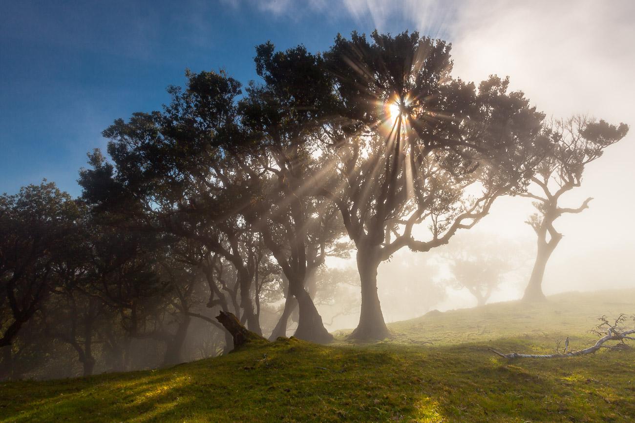 https://luisafonso.com/wp-content/uploads/2021/01/Madeira_Fanal-8439_1300_sRGB.jpg